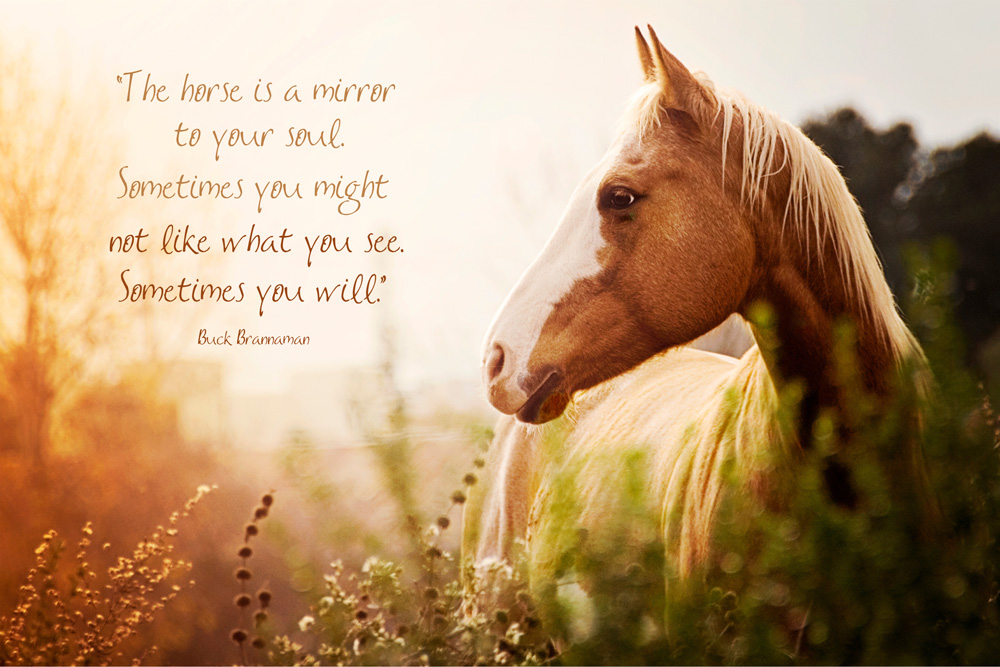inspirational horse quotes thelove4happiness